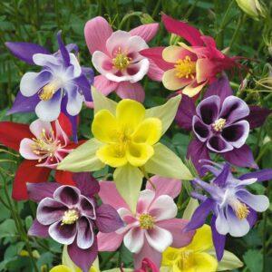 Маленький пакет цветы (от 1.8 грн)