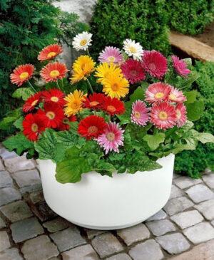 Семена цветов (от 2.99 грн)