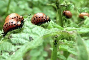 От насекомых и вредителей